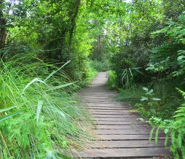 reserve naturelle seignosse