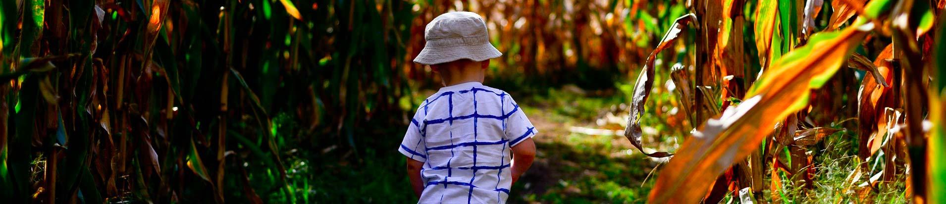 labyrinthe maïs landes